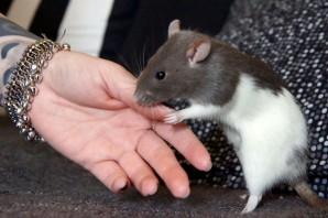 """""""Tierversuche haben keinen Nutzen für die Forschung"""" – THEMA 07/15 Veganes Leben"""