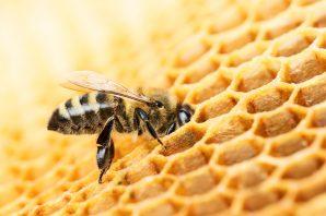 Biene schlägt Chemiekonzern