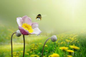 Bienenparadies mit Rentenanspruch